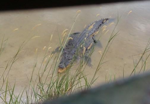 paya-indah-wetlands_110315