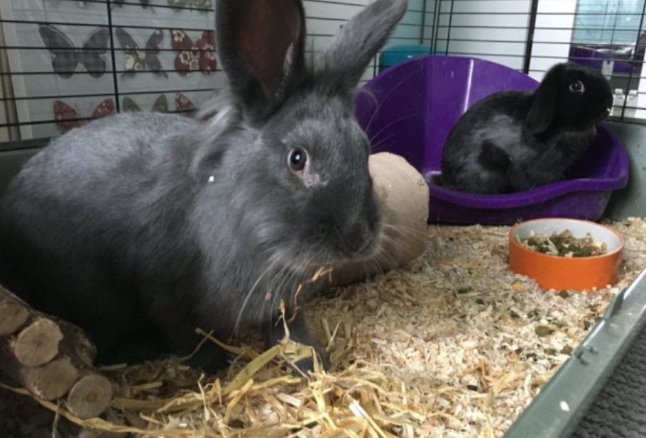 School's stranded reading rabbits sledged three miles to warmth and safety in heroic rescue