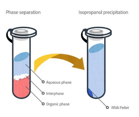 Phase Separation Method