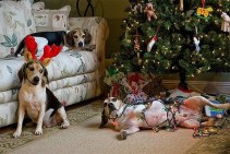Dogs and Christmas trees