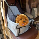 Best Dog Carrier For Cars Seats