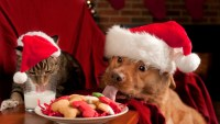 Cats Dogs and Christmas trees