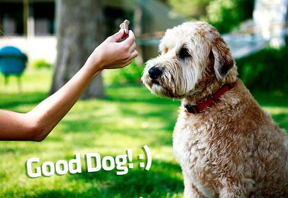 How To Mirror Method Dog Training Best Top Care With Dogs