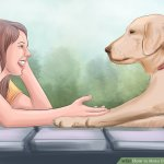 7 Essential Activities That Build Relationship You And Your Dog