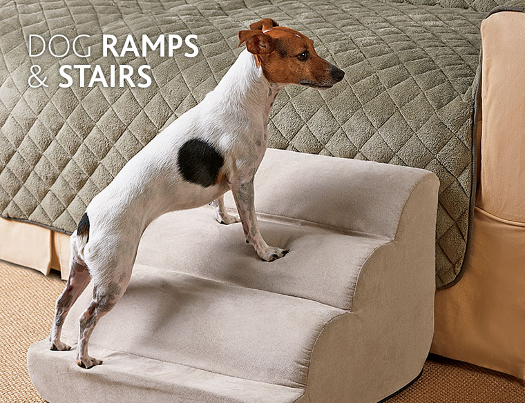 Best Dog Steps And Ramps Reviews Best Top Care With Dogs
