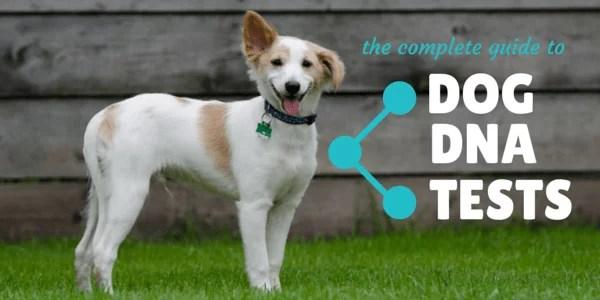 Best Dog DNA Test Reviews