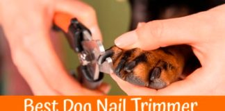 How To Buy A Best Dog Nail Clippers