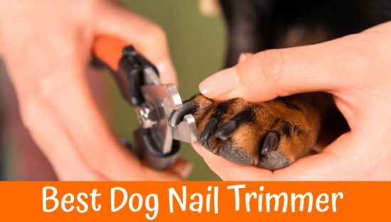How To Buy The Best Dog Nail Clippers
