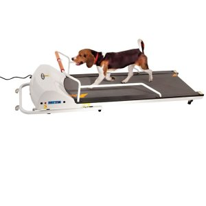Best dog treadmill for your dog