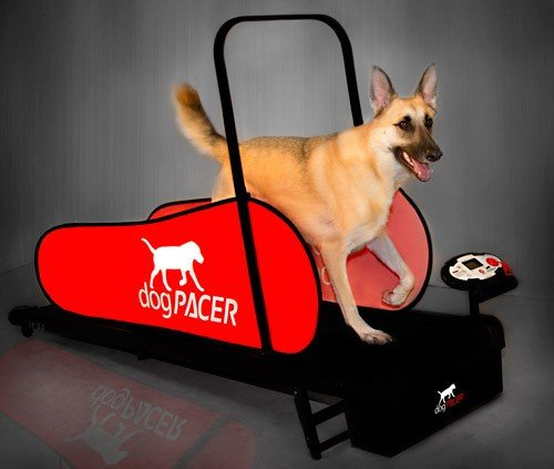 Best dog treadmill for your dogs