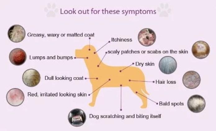 Dog Health Issues