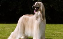 About Dog Coats