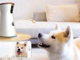 Best Pet Camera Reviews