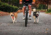 Best Dog Bike Leash Review