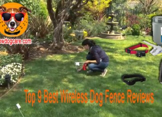 Top 9 Best Wireless Dog Fence Reviews