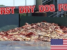 10 Worst Dog Foods and 5 Recommend Feeding
