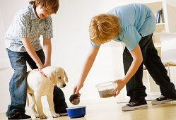Guide How To Take Care of A Puppy with Dog Food