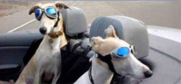 Doggie sunglasses from sun and wind