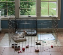 Dog Playpens Are A Must Have For Every Dog