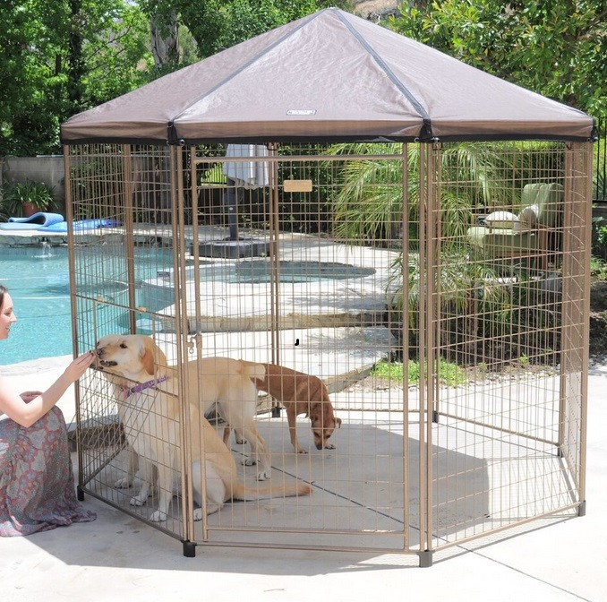 Best Outdoor Dog Kennel & Best Outdoor Dog Kennel Reviews - Best top care with dogs