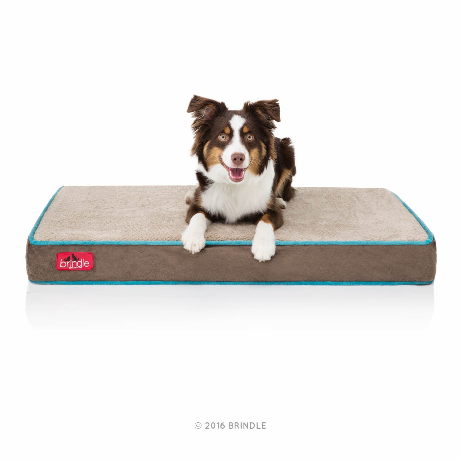 free overstock pet shipping lounge memory bed grey product ultimate petfusion today premium supplies edition foam and dog