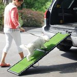 Best Dog Steps and Ramps