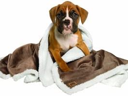 Best Dog Blankets For Waterproof, Sleep & Warmth
