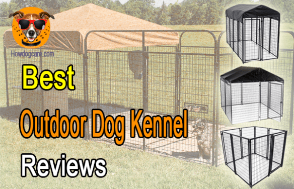 How To Make Dog Kennel More Interesting