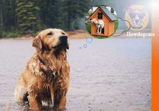 Weathers? Your dogs need Outdoor Dog Houses