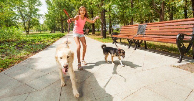 How to Dog to Stop Pulling on a Leash