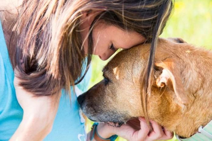 Strongest dog sense nose can detect diabetes
