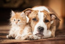 Cat and dog hair shedding