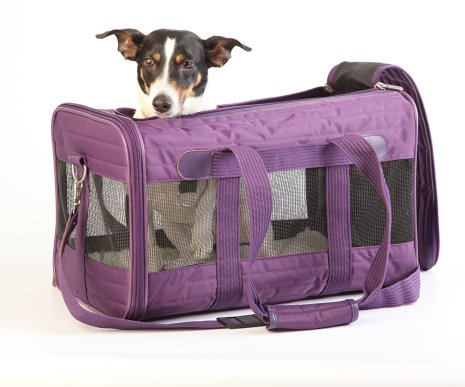 Best Dog Crates for Anxious Dogs