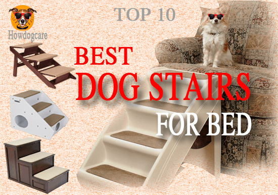 Top 10 Best Dog Stairs For Bed Reviews Best top care with dogs
