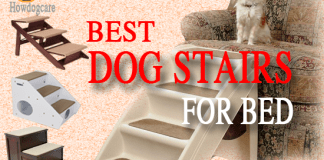 Best Dog Stairs For Bed Reviews