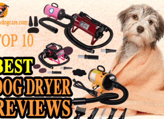 Best Dog Dryer