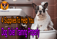 4 SuppliesTo Help You Dog Toilet Training Properly
