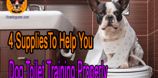4 SuppliesTo Help You Dog Toilet Training Properly