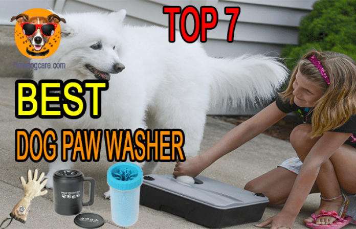 Top 7 Best Dog Paw Washer Reviews