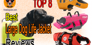 Top 8 Best Large Dog Life Jacket Reviews