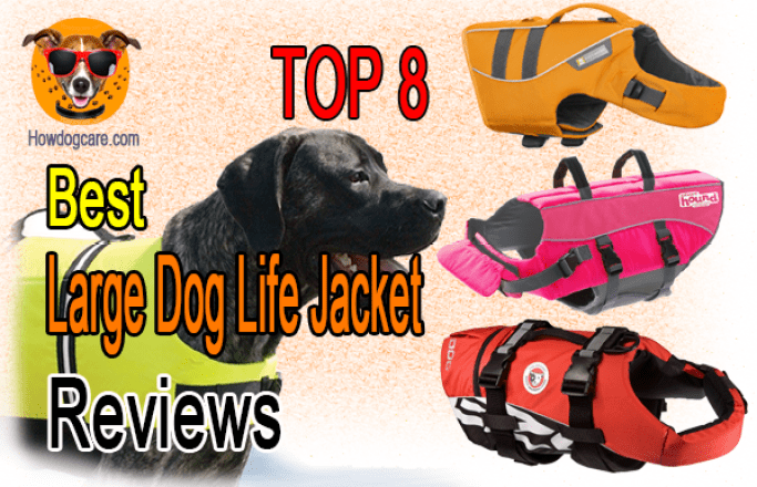 Top 8 Best Large Dog Life Jacket Reviews Best Top Care With Dogs