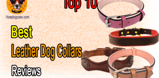 Top 10 Best Leather Dog Collars Reviews