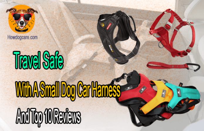 Travel Safe With A Small Dog Car Harness