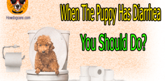 When The Puppy Has Diarrhea You Should Do?