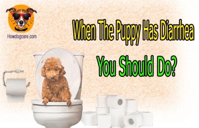 When The Puppy Has Diarrhea You Should Do?