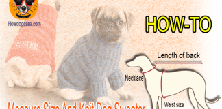 how to measure size and knit dog sweater