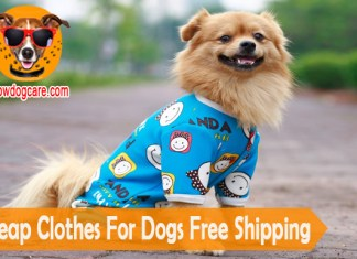 10 Cheap Clothes For Dogs Free Shipping