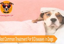 The Most Common Treatment For 8 Diseases In Dogs