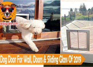 10 Best Dog Door For Wall, Doors & Sliding Glass Of 2019