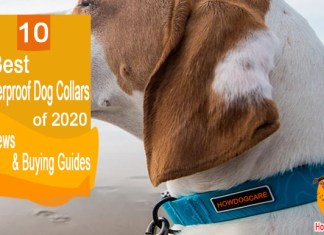 10 Best Waterproof Dog Collars Reviewed